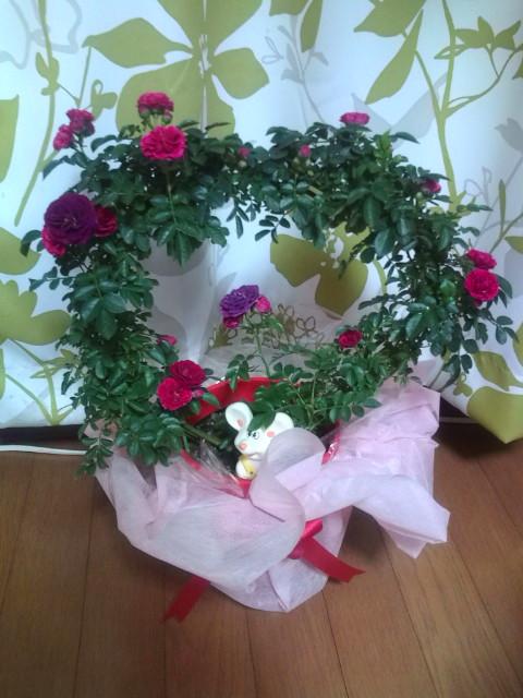 バラがたくさん咲きました(^-^)